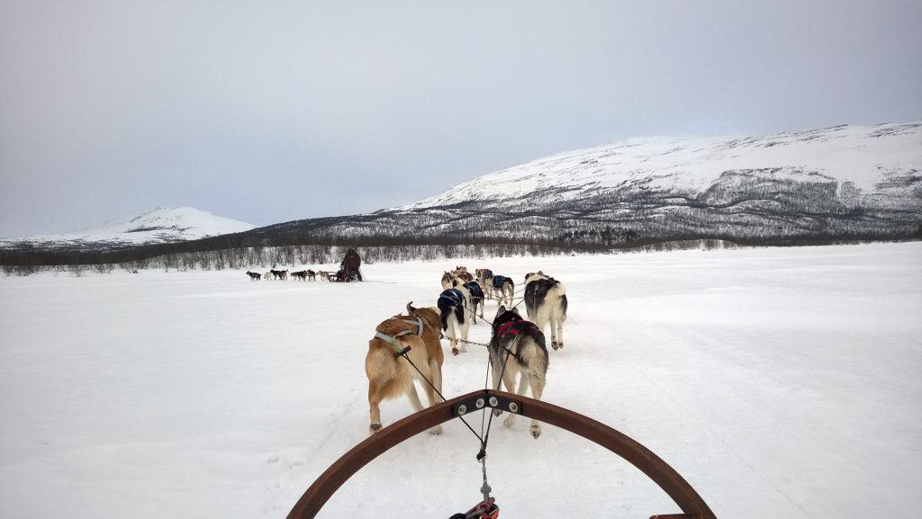 Abisko Husky Sled Ride